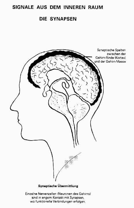 Gehirnrinde